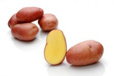 Arosa – Cartofi de sămânță – Solana România