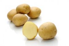 Caruso – Cartofi de sămânță – Solana România