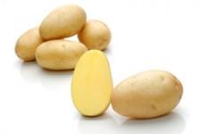 Flavia – Cartofi de sămânță – Solana România