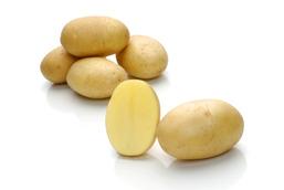 Miranda – Cartofi de sămânță – Solana România