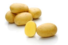 Natascha – Cartofi de sămânță – Solana România