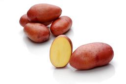 Rosara – Cartofi de sămânță – Solana România