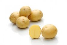 Satina – Cartofi de sămânță – Solana România