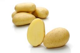 Velox – Cartofi de sămânță – Solana România