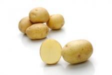 Verdi – Cartofi de sămânță – Solana România